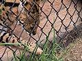 Oaklawn Farm Zoo, May 16 2009 (3538922423).jpg