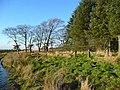 Obsolete deer-proof fencing - geograph.org.uk - 637519.jpg
