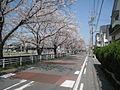 Okazaki-Yabuta-1.jpg