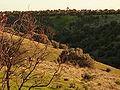 Onkapringa River NP kangaroo P1000612.jpg