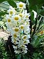 Orchid bunch.JPG