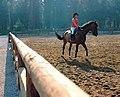 Orfe Horse Back Riding Club Turkey - panoramio.jpg