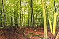 Ostfriesland msu-0685.jpg