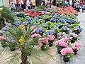 Outdoor flower stall, Sheffield - DSC07459.JPG