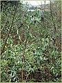 Overgrown (505689389).jpg