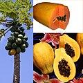 Owoce Papaja.jpg