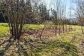 Pörtschach Winklern Brockweg Teich mit Typha latifolia 30032019 6238.jpg