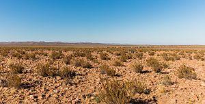 Atacama Desert - Wild donkey in the Atacama desert.