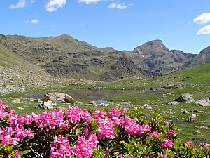 Wildlife of Andorra - Andorran landscape