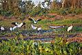 Pantanal Birds.jpg