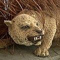 Panthera pardus adersi2.jpg
