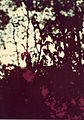Paolo Monti - Serie fotografica - BEIC 6362314.jpg