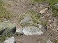 Papallona entre l'estany de Malniu i el Prat Fondal P1300490.jpg