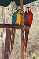 Paphos Bird Park, Cyprus - panoramio.jpg