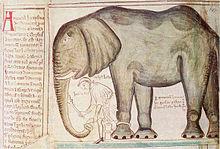Luonnos norsu