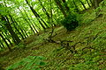 Park Krajobrazowy Radojewo 20.JPG