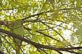 Parrot14.jpg
