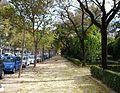 Passeig de l'avinguda de Blasco Ibáñez (València).jpg