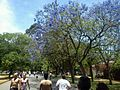 Passeio no Parque do Ibirapuera.JPG