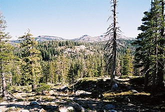 Sierra Nevada subalpine zone - Typical subalpine woodland stand in the Sierra Nevada