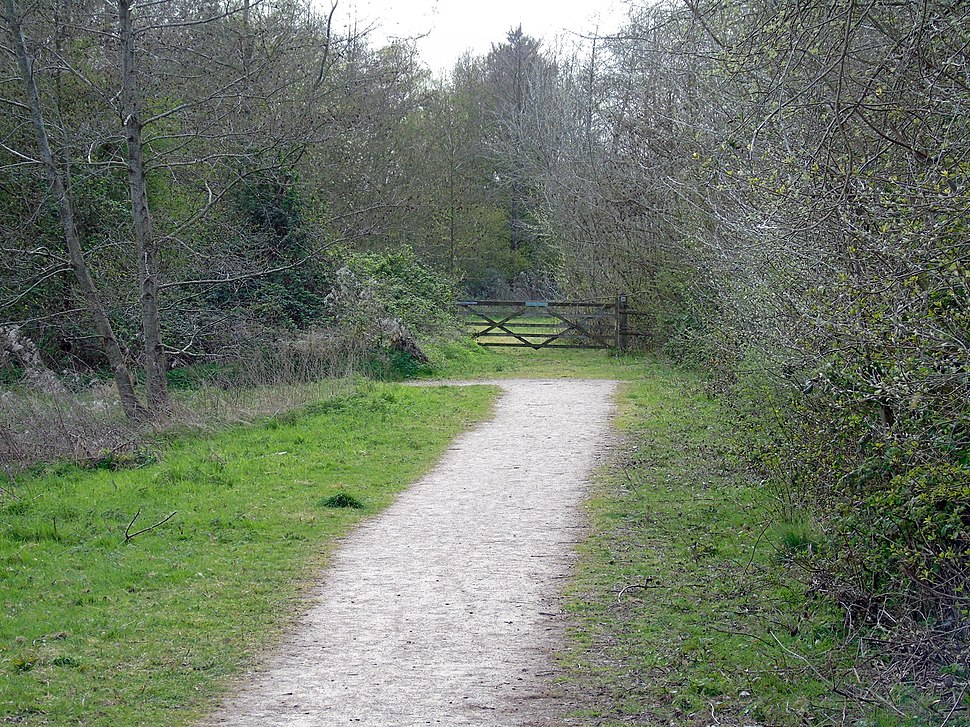 Path In Forest Before Turning Right To Newport Wetlands RSPB Reserve Forest Viewing Platform
