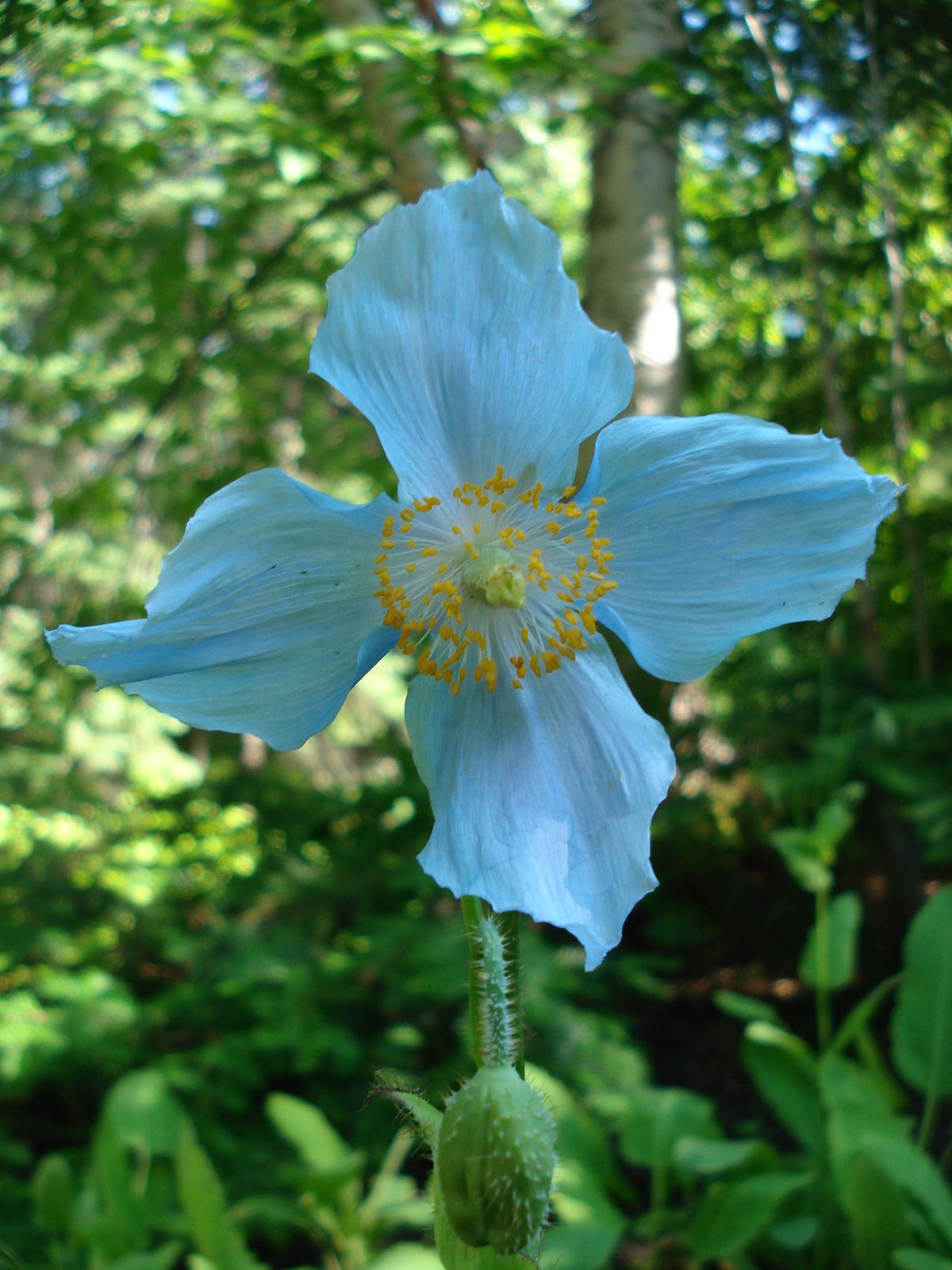 Jardins de m tis wikip dia for Jardin de metis 2016