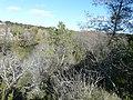 Paysage au sud du zoo de Lunaret (2363302287).jpg