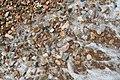 Pebbles on the Beach, Rafina, Greece (9235414020).jpg