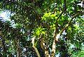 Pepohonan di semak belukar (6).JPG
