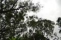 Perspektiven des Parque Nacional do Iguaçu 20 (22126070511).jpg