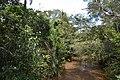 Perspektiven des Parque nacional Iguazú 10 (21493041964).jpg