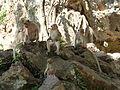 Phang Nga - Wat Suwannakuha P1120486.JPG