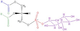 Phosphatidylinositol - Image: Phosphatidyl Inositol