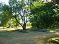 Picnic tables under trees, near main parking lot, at Molalla River State Park, Oregon.jpg