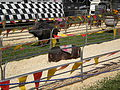 Pig racing at 2008 San Mateo County Fair 6.JPG