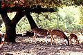 PikiWiki Israel 29905 Wildlife and Plants of Israel.jpg