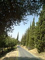 PikiWiki Israel 8847 yad vashem amp; Jerusalem forest.jpg