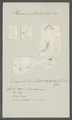 Planaria subtentaculata - - Print - Iconographia Zoologica - Special Collections University of Amsterdam - UBAINV0274 105 09 0007.tif