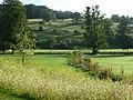 Plantation, Giggleswick - geograph.org.uk - 916945.jpg