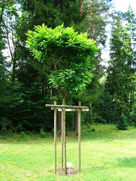 file podlaskie suprasl kopna gora arboretum. Black Bedroom Furniture Sets. Home Design Ideas