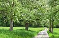 Poertschach Brockweg Birnbaumallee 04052013 177.jpg