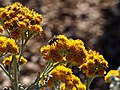 Pollenation (26597681320).jpg