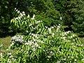 Poltava Botanical garden (180).jpg