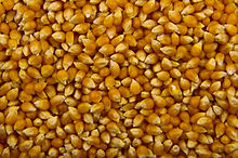 36d71dce8 Popcorn - Wikipedia