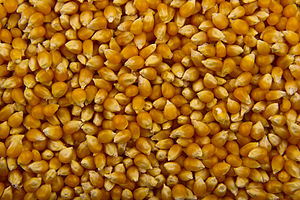 Popcorn - Unpopped corn