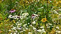Pražská botanická zahrada, Prager botanischer Garten - panoramio (9).jpg