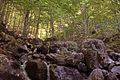 Prevalla Nature - Kosovo.jpg