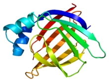 Protein FABP2 PDB 1kzw.png