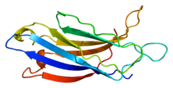 Protein SYT1 PDB 1byn.png