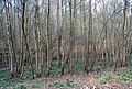 Puckden Wood - geograph.org.uk - 1261693.jpg